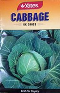 Picture of Cabbage - KK Cross