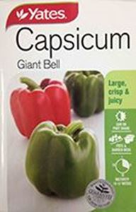 Picture of Capsicum - Giant Bell